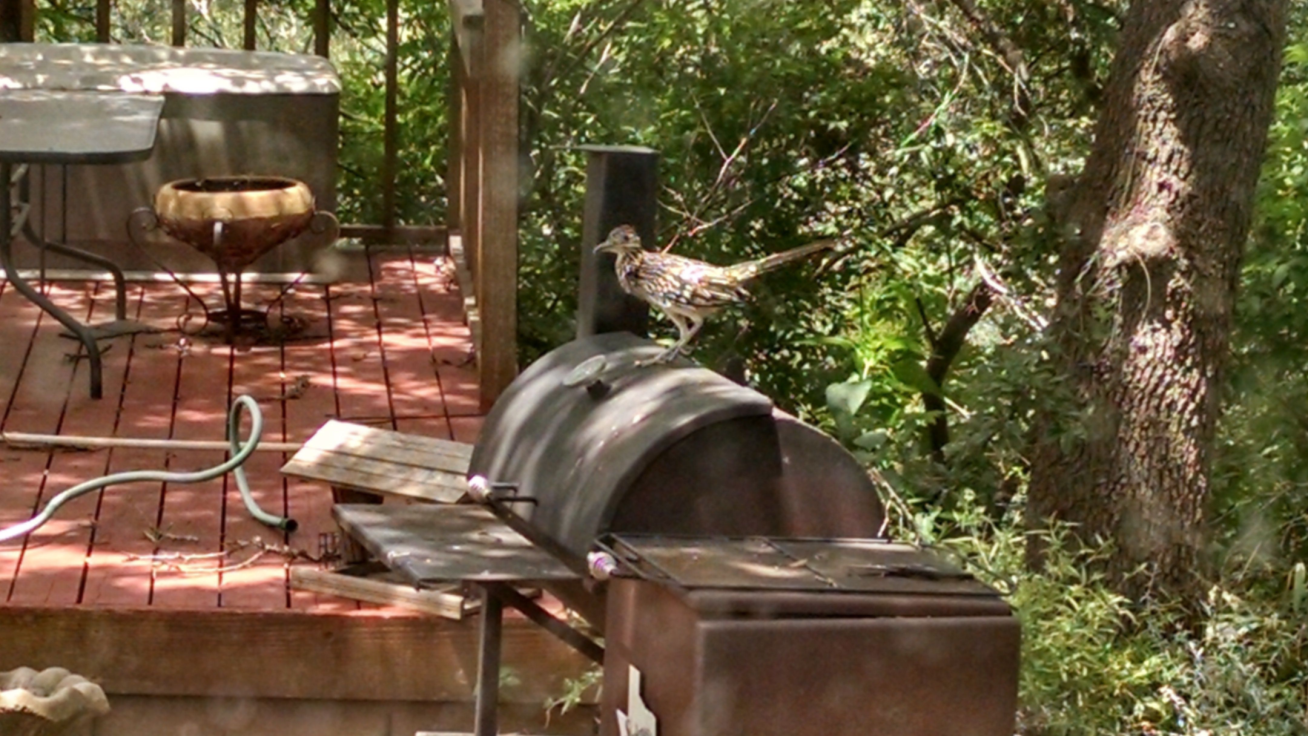 Roadrunner on grill at Scurlock Farms